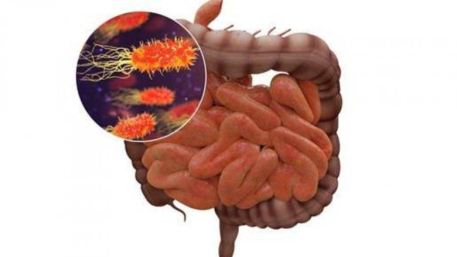 microbioma-CSIC